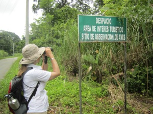 Birding at Achiote Rd.