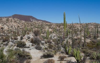 Cataviña, Baja