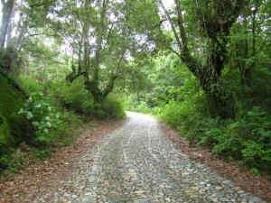 Humid Pine-Oak forest along the road to La Bufa