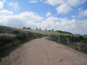 Grasslands near San Juan de Llanos, GTO, Mexico