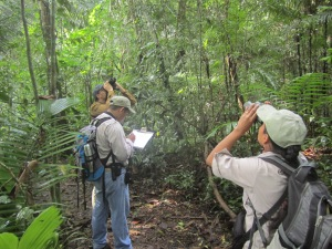 Bird monitoring Yaxchilan