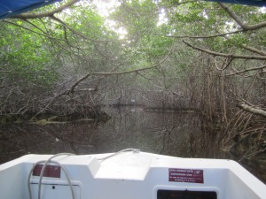 Into the mangrove tunnel (Celestun)