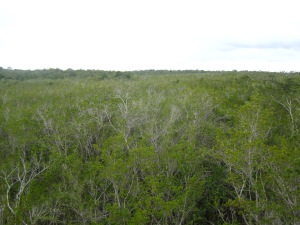 Miles of mangroves as seen from the observation tower at El Remate