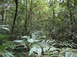The forest at Reserva el Jaguar
