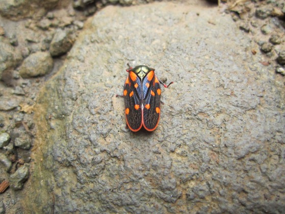 When the birding was slow we found a couple of awesome looking beetles. ID anyone?