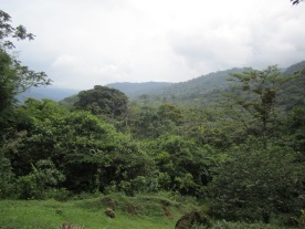 The forest at Pocosol