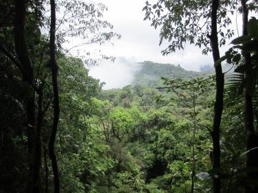 The forests around San Gerardo