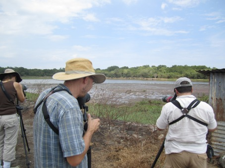 Scanning for Shorebirds at Chomes with Pat and Susan