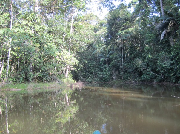 The Lagoon where we found the Agami Heron