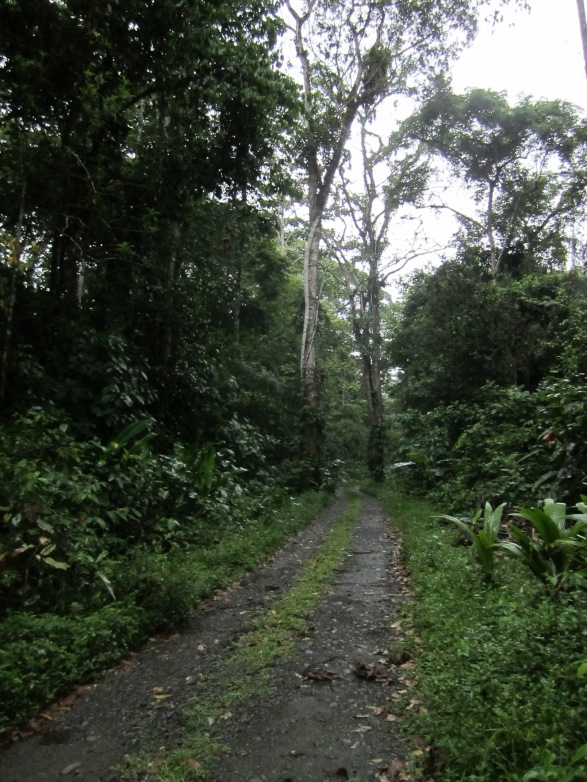 The forest along the RECOPE road