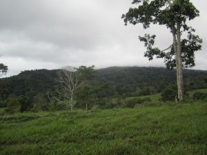 View of the forest at Las Alturas