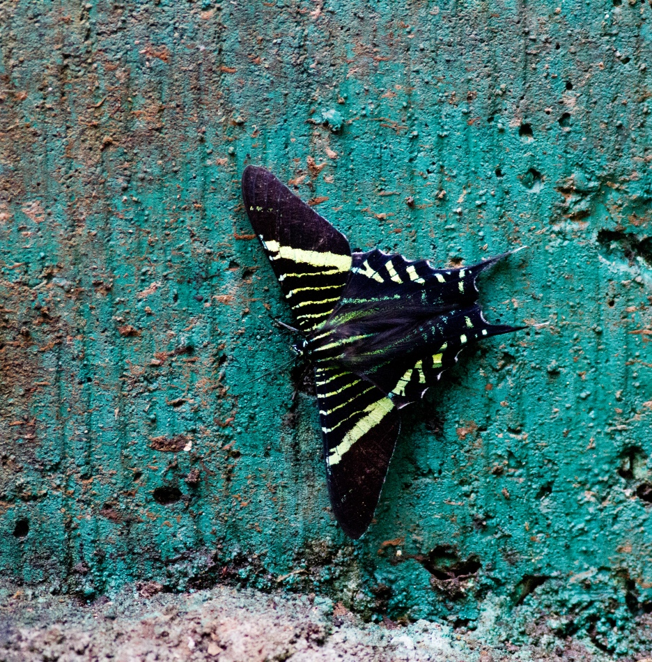 Unknown Butterfly at Rancho Frio