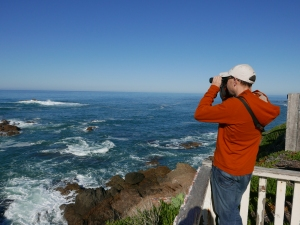 Birding at Pigeon Point, San Mateo County, California