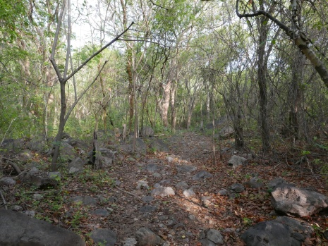 Lower forest trail at Los Besotes