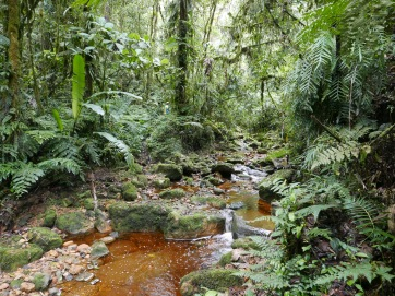 Forest stream at Cachalú