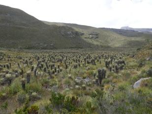 Valle de Frailejónes, Cocuy National Park