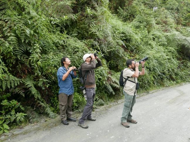 Oswaldo, Josh, and Giovanni birding Monterredondo