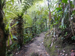Trail at the Chestnut-capped Piha Reserve