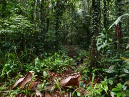 Primary rainforest in the reserve