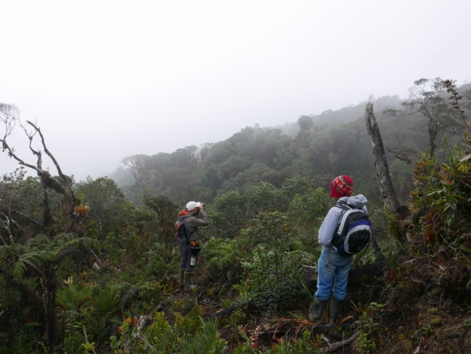 Brayan and Josh scanning for Chestnut-bellied Cotinga at Paramo Bordoncillo
