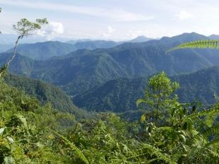 View near Bellavista Cloudforest Lodge