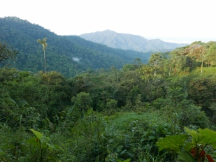 Mashpi-Amagusa Reserve