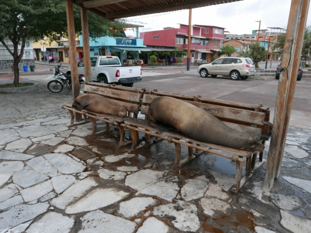 Sea Lions taking over San Cristobal