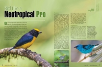 Bird Like a Neotropical Pro - ABA Birder's Guide
