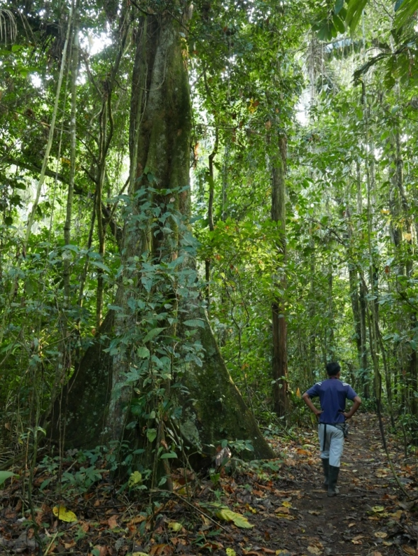 Pablo walking the trails at Sacha Kawsay