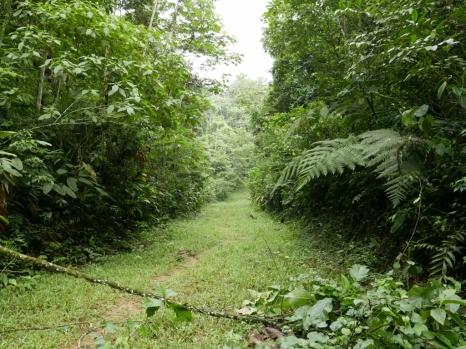 Main road/trail heading north