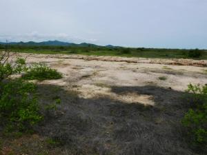 Band-tailed Sierra Finch habitat in coastal Ecuador